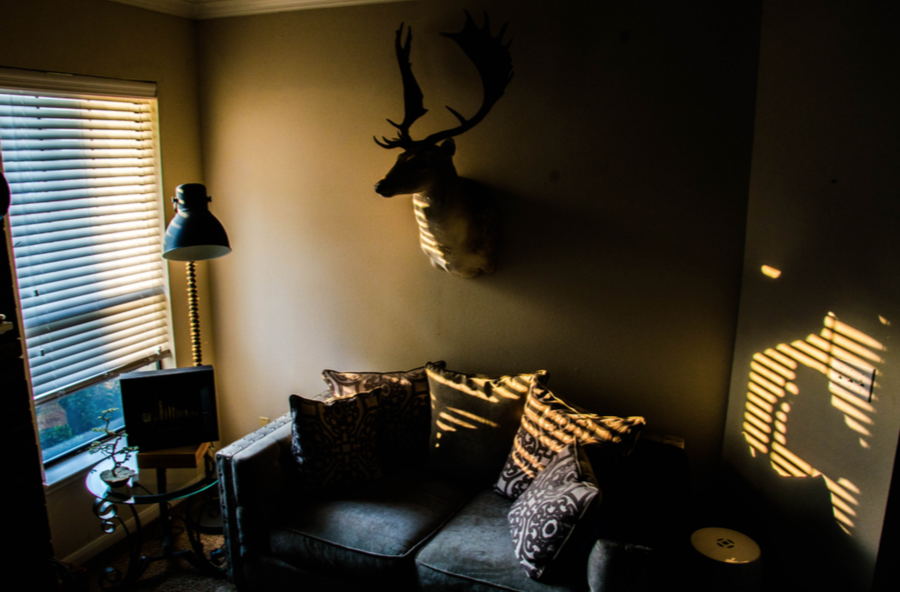 Trophy Mount as art in the home