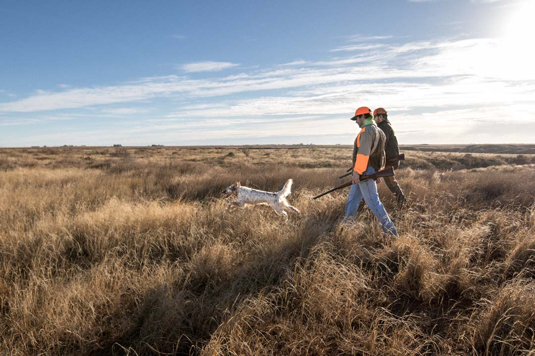 Bobwhite Quail Hunters Enjoy Time in the Field