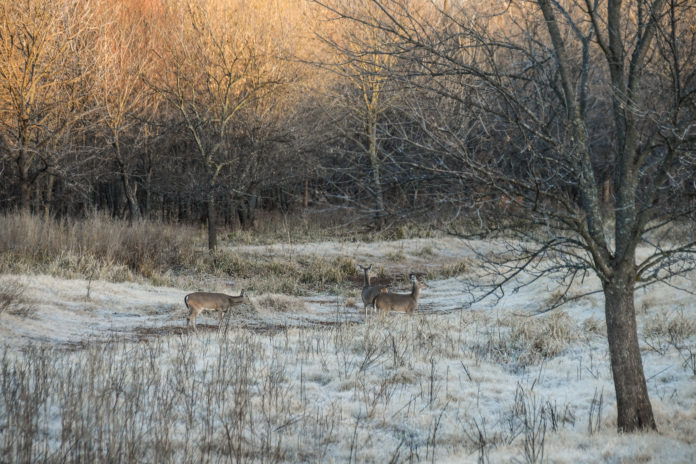 Hook and Barrel Deer Scouting feature